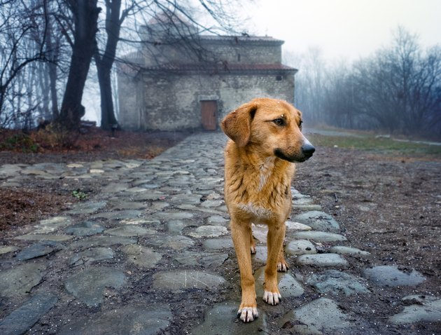 Stray dog by an orthodox monastery, Georgia