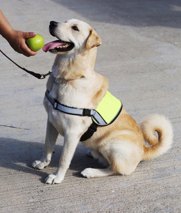 The dog-policeman .
