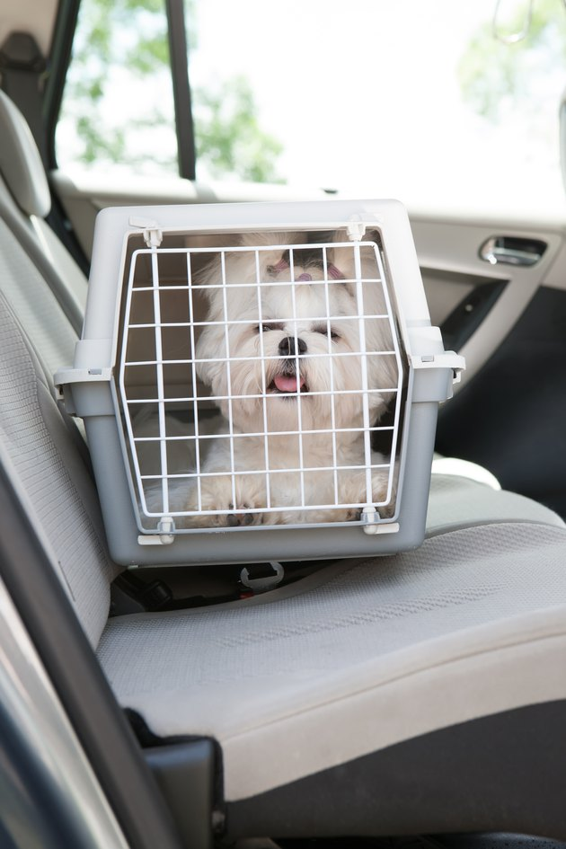 Small white dog inside a carrier in the car
