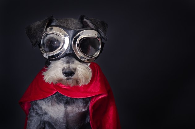 dog in goggles and red cape