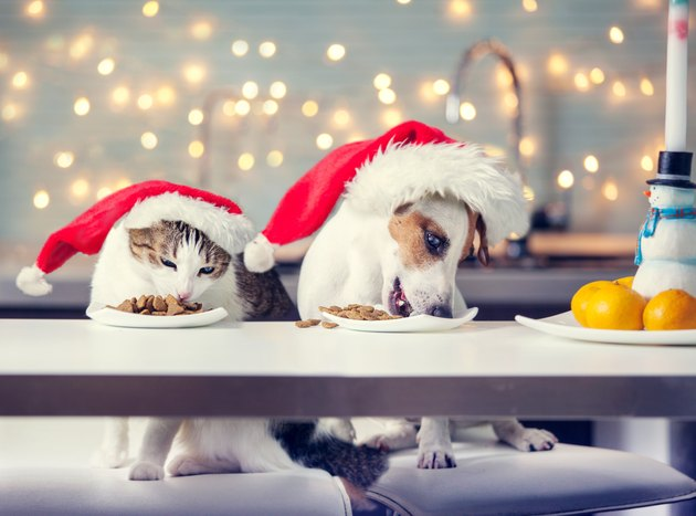 Dog and cat in Christmas hats eating food