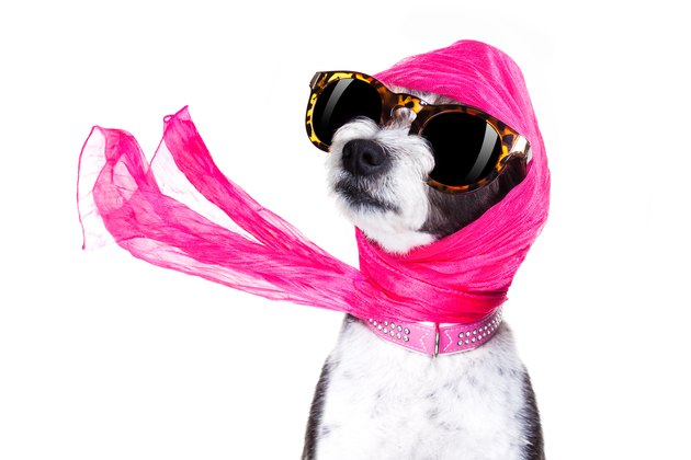 diva chic dog wearing sunglasses and a pink head scarf