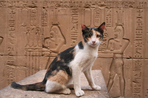 Portrait Of Cat Sitting Against Ancient Egyptian Temple