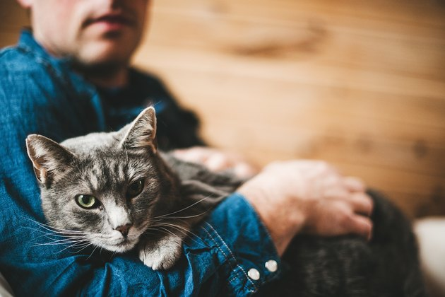 Man and his grey cat