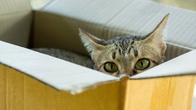Cute gray striped cat lying in a box.