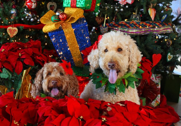 Dogs with holiday decorations