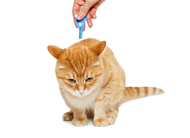 Treatment of cat for fleas and ticks