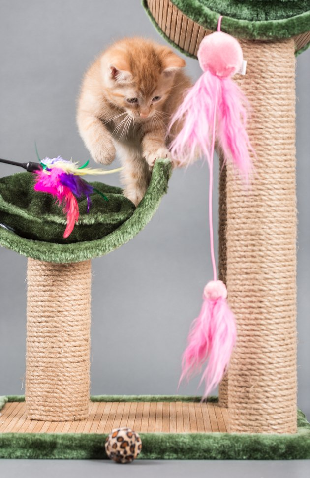 Small kitten plays with a cat tree