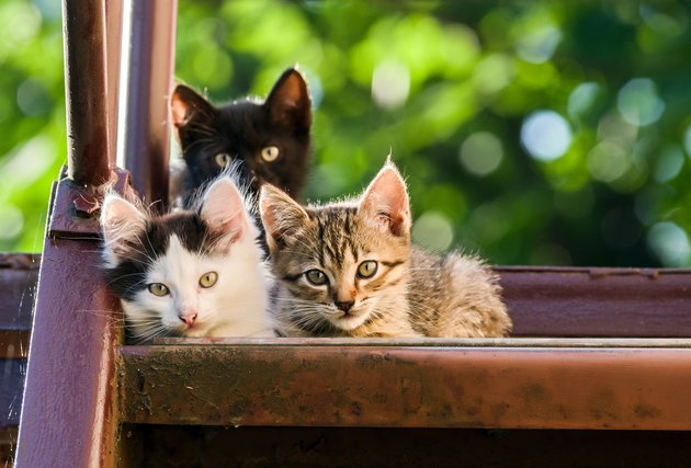 Three colorful kittens look into the camera on a blurred natural background