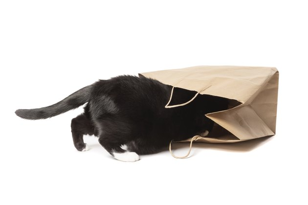 Curious Cat Crawling Inside Brown Paper Shopping Bag