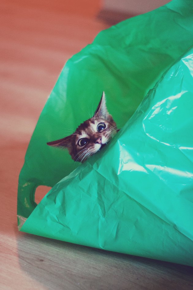 Mad Cat in green plastic bag