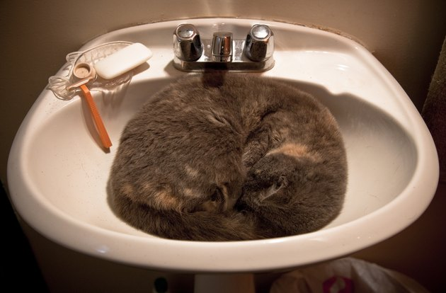 Cat Asleep In A Wash Basin