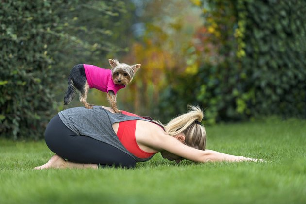 Young woman doing yoga prenatal child posture position with cute Yorkshire Terrier dog