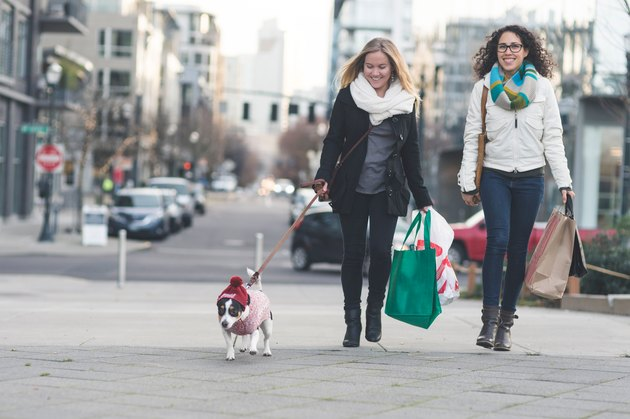 Young stylish females walking down a city street with a dog and shopping bags
