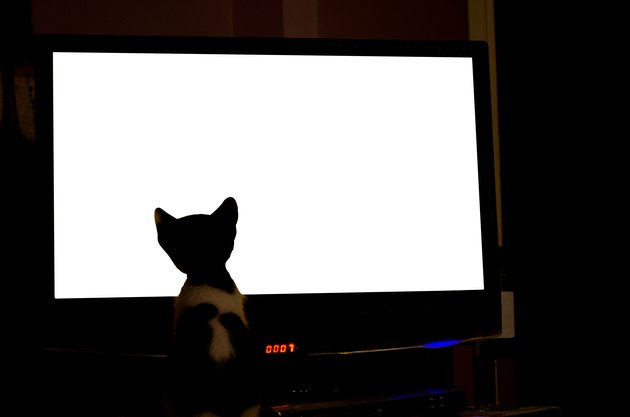 Curious Cat Watching Television