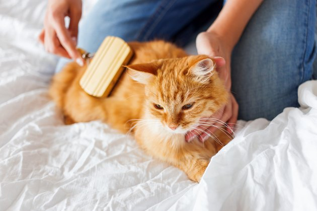 Woman combs a dozing cat's fur.