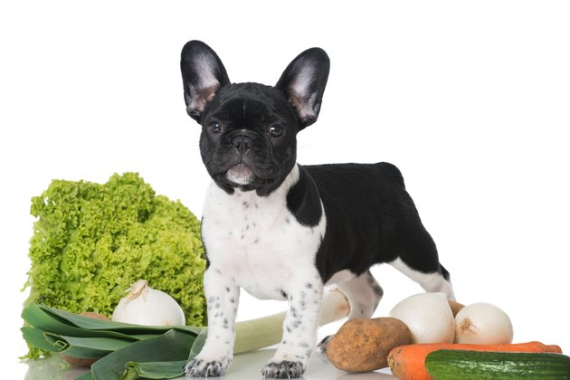 Puppy with vegetables