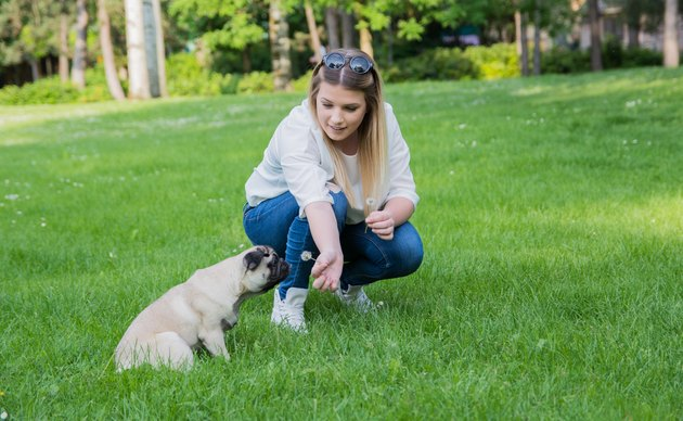 Girl spending quality time with her pug in the park