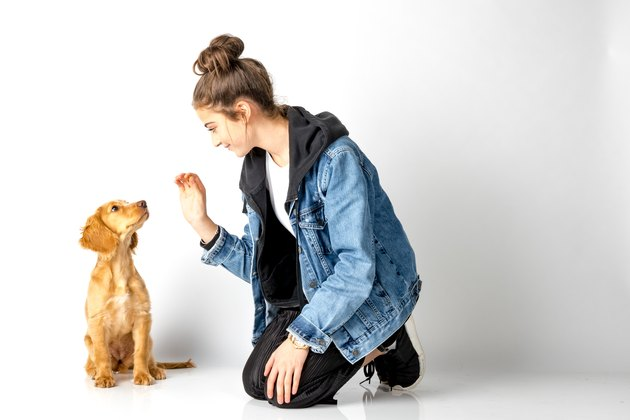 Full Length Of Young Woman Playing With Puppy Against White Background