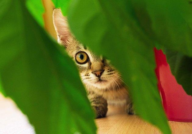 Little hunter cat near houseplants