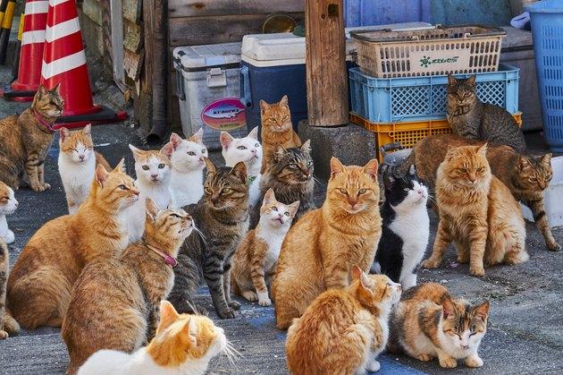 Japan, Cat island, Aoshima island