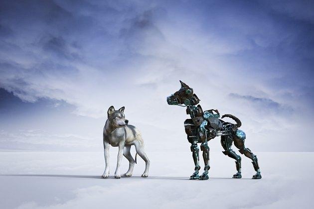 Dog looking at robot dog