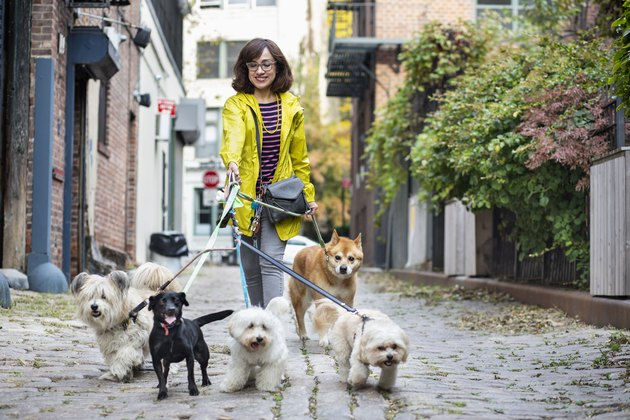woman walking five dogs
