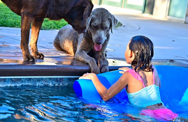 Girl Looking At Dog In Swimming Pool