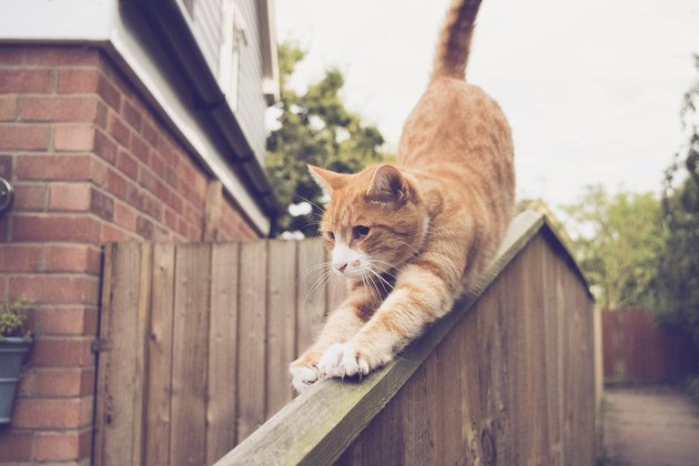 Close-Up Of Ginger Cat On Railing