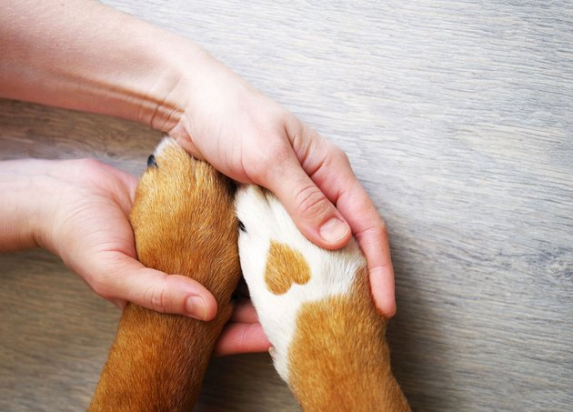 dog paw with a spot in the form of heart and human hand close up