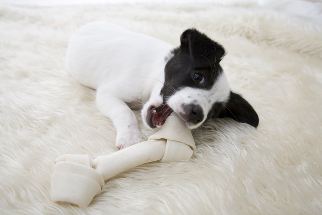 Little Pup With Bone