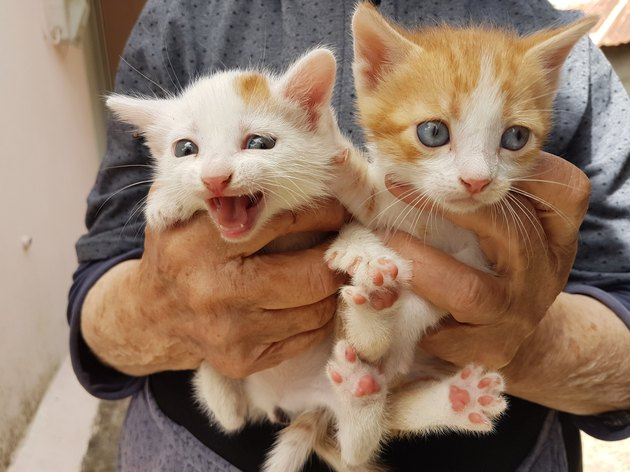 cats newborn face and feet on grandmothers hands happy