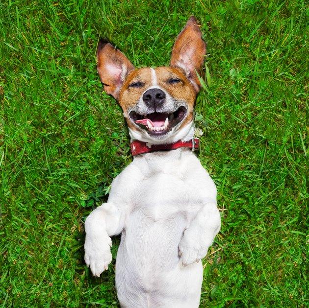 very funny dog