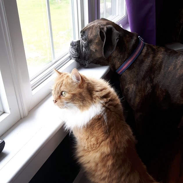 dog and cat looking out the window together