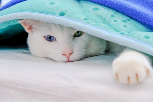 Cat lying under a blanket stretched