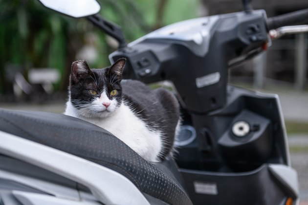 cat on a motorcycle