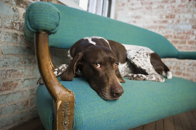 Pointer on a chair