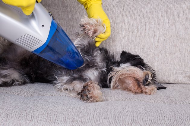 person uses small hand vacuum on relaxed dog