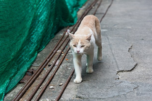 Stray cat walking down the street