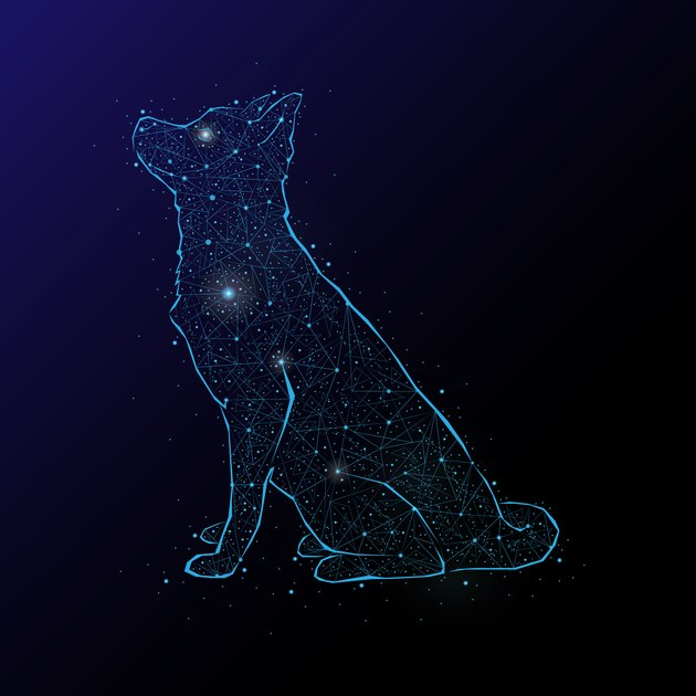 Abstract image of a dog in the night sky and space. Consisting of points and lines.
