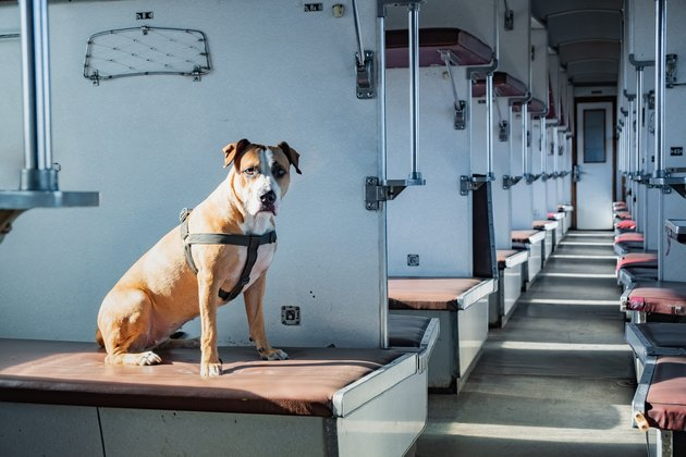 Dog sits in an empty vintage passenger train car