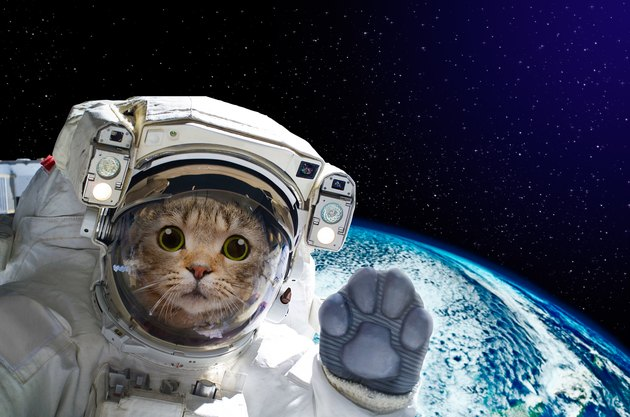 Cat astronaut in space on background of the globe
