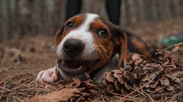 Puppy in forest