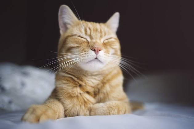 Happy sleeping ginger cat