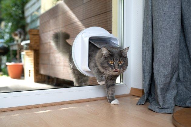 cat going through cat flap