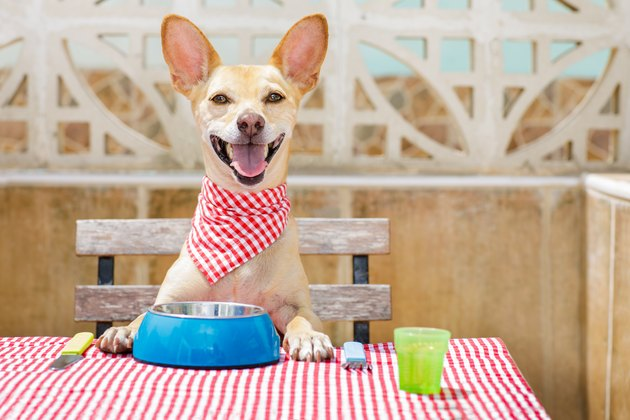 dog eating at the table with food bowl