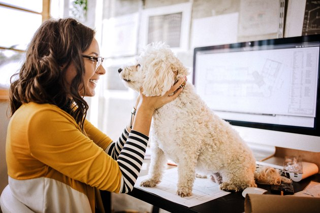 Architect stroking cute dog at pet friendly office