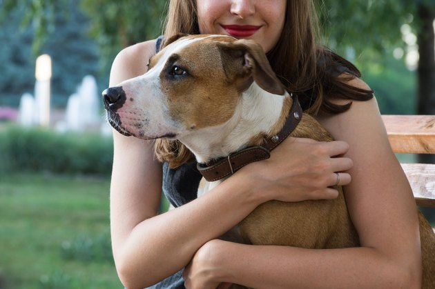 Young female sits on a bench and hugs her lovely staffordshire terrier dog on a warm summer day
