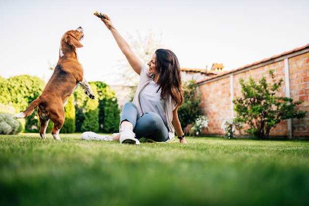 Beautiful woman giving food to dog from her hand.