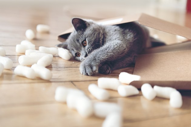 Kitten playing with packing peanuts